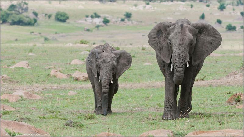 Africa Photo Tours - Tanzania